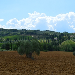 Montalcino subzones: Why certain estates were able to produce great wines in2014