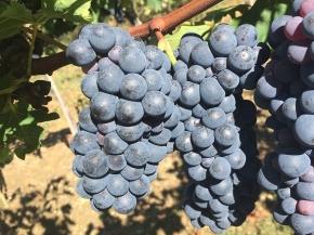 Harvest update fromStefano