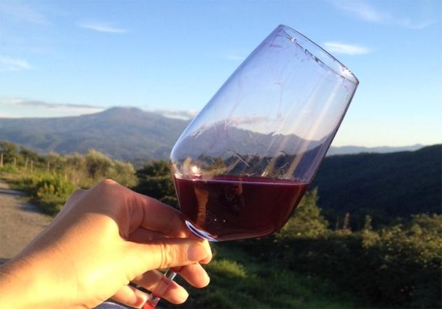 what-is-vino-novello