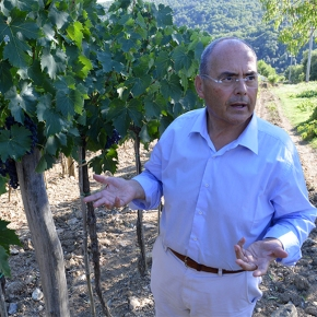 Celebrate the Brunello harvest by hiking through the vineyards with winemakerStefano