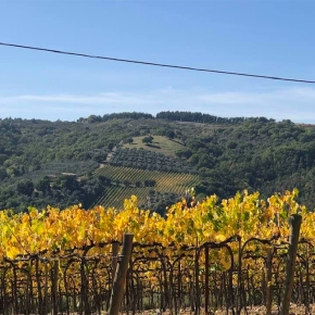 Subzoning doesn't work in Montalcino. Here'swhy.